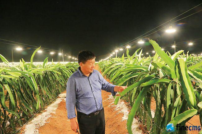 海南省儋州中和镇:火龙果基地夜晚变灯海 补光技术促火龙果增产增效