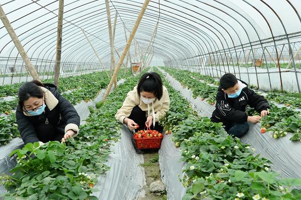 """湖南隆回:""""一体化""""产业引领群众脱贫致富奔小康"""
