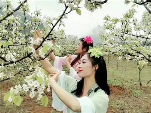 阳山.黎埠乡村旅游节暨梨花观赏季盛况开启