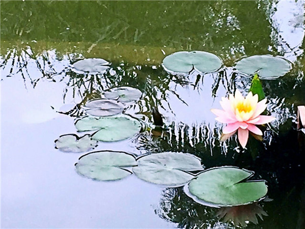 春游流花湖