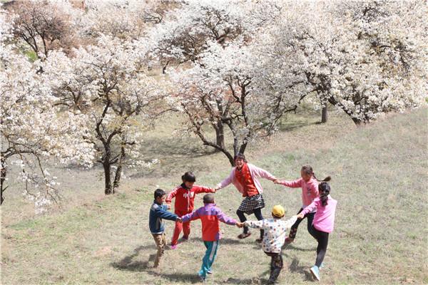 甘肃泾川:忽如一夜春风来 千树万树梨花开